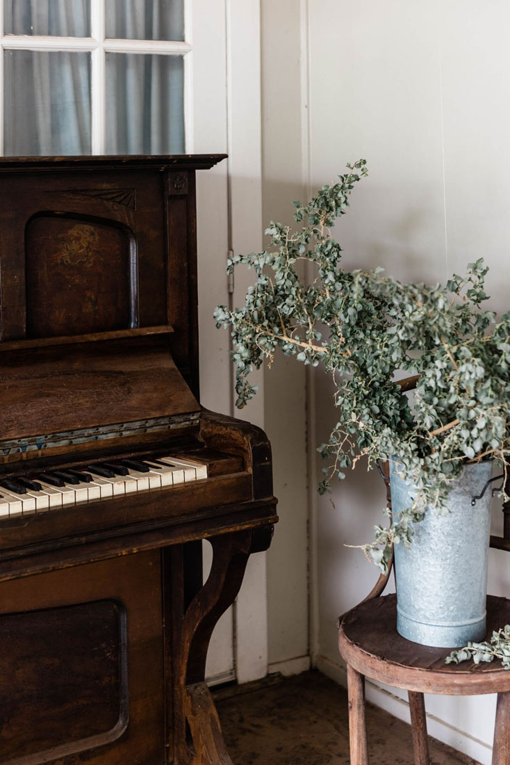 old piano with saltbush plant
